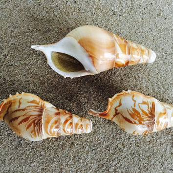 Sunset Beach Magic Conch (Handcarved Seashell Pipe) - by ShellPipe (Free pipes with every order!)