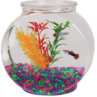 Walmart: Aquarius 1-Gallon Fish Bowl