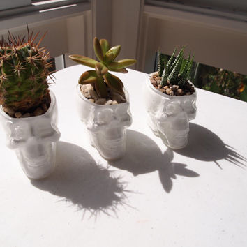 3 X Crystal Glass White Skull Planter Garden Decor For Cactus Or Succulent Plant Holder Vase Head