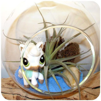 Air Plant Terrarium Kit Child Gift Equestrian Lovers - Tillandsia AirPlant Hanging Glass Globe Horse Lovers Birthday Baby Shower Gift