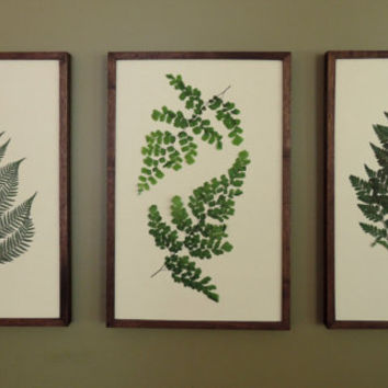 Pressed Botanical Ferns 11x17 in Handmade Walnut Frames