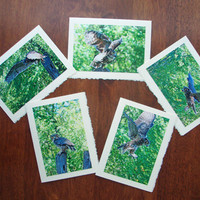 Five Great Horned Owl Notecards Nature and Wildlife Photo Note Cards - Free Shipping