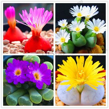 203pcs/pack,Rare Mix Lithops Seeds Living Stones Succulent Cactus Organic Garden Bulk flower Seeds,bonsai plant for balcony