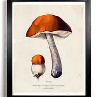 Red Cap Fungi Mushroom Antique Illustration  8 x 10 Giclee Art Print Upcled Collage Recycled Book Art Buy 2 Get 1 FREE
