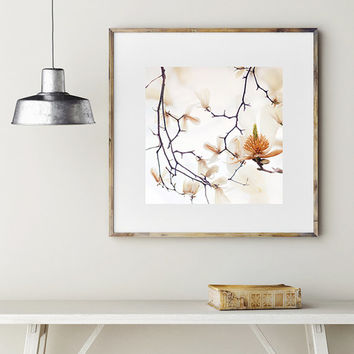 magnolia flower print, white blossoms, flower photography, white flowers, magnolia tree print, bedroom art, portland Oregon, square print