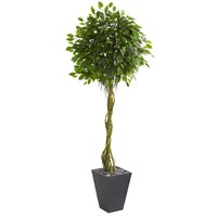 Artificial Tree -6 Foot Ficus Tree In Slate Planters