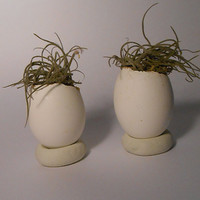 Pair of Egg Planters for Succulents-Cacti-Hens and Chicks/Easter/Spring
