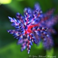 Macro Photography Nature photography flower by SeeWorldThruMyEyes