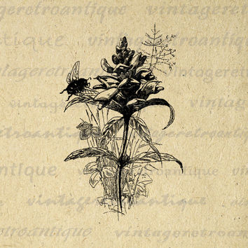 Flower with Bee Graphic Image Printable Antique Digital Download Vintage Clip Art for Transfers Making Prints etc HQ 300dpi No.3577