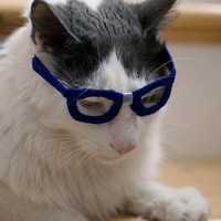 Nerd Glasses for Cats - Kitty Poindexter