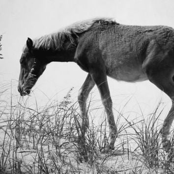 Black and White Horse Photography, Beach Photo Art of Young Wild Horse on Outer Banks Beach Dunes - Wall Art Print