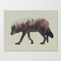 Norwegian Woods: The Wolf Canvas Print by Andreas Lie