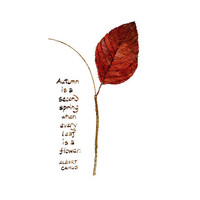 Autumn Leaf and Quote Watercolor - Autumn Leaves, Fall Foliage, Albert Camus - Art Print of Watercolour