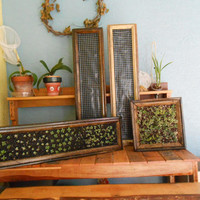 Vertical Garden Reclaimed Wood