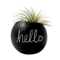 Chalk it Up Air Plant