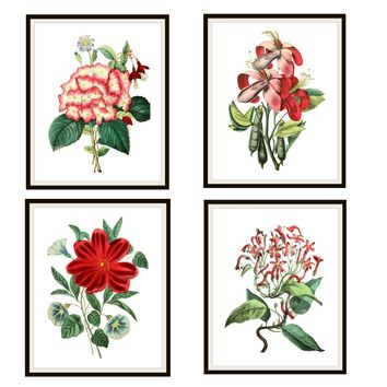 "Set of 4 Vintage Botanical Art Print Poster Reproductions ""Red and White Flowers"" Set Unframed 8 x 10"" or 11 x 14"""