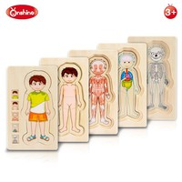 Onshine Wooden Multi-layer Puzzle Toys Boys Girls Body Structure Children Kids Learning Cognition Toys