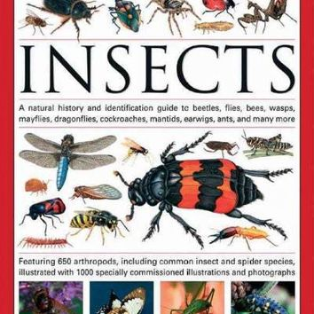 The Illustrated World Encyclopedia of Insects: A Natural History and Identification Guide to Beetles, Flies, Bees, Wasps, Mayflies, Dragonflies, Cockroaches, Damselflies, Cockroaches, Mantids, Earw (Illustrated World Encyclopedia)