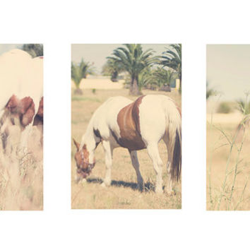 Horse photography, horse art, horse print set , fine art equine photo set of three, equestrian decor, equestrian home decor, wall decor