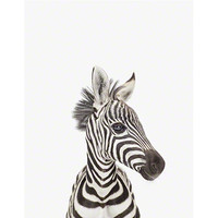 Baby Zebra Close-Up - The Animal Print Shop by Sharon Montrose