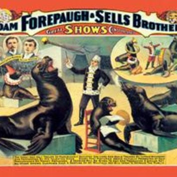 Troupe of Marvelously Educated Sea Lions and Seals: Adam Forepaugh and Sells Brothers Shows: Fine art canvas print (12 x 18)
