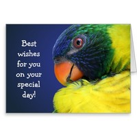 Colorful Rainbow Lorikeet Best Wishes Greeting Card