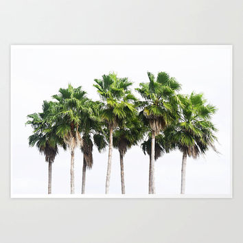 Sand Key Palms - Photograph Print, Tropical Green Palm Trees Decor, Beach House Style Wall Art Photography Hanging. 8x10 11x14 16x20 20x30