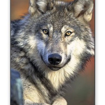 White Grey Brown Wild Wolf - He's Devious Apple Iphone 4 Quality TPU Soft Rubber Case for Iphone 4/4s - AT&T Sprint Verizon - White Case