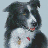 Cross Stitch Kit By David Finney 'Jazz' Pet Collie Dog CrossStitch Kit