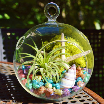 Rainbow Shells Terrarium ~ Glass Globe Hanging Terrarium Kit with Tillandsia  Air Plant - Beach / Home Decor - White Starfish - Gift idea
