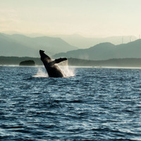 Whale Art, Humpback Whale Photo, Windmill Wall Art, Photo Download