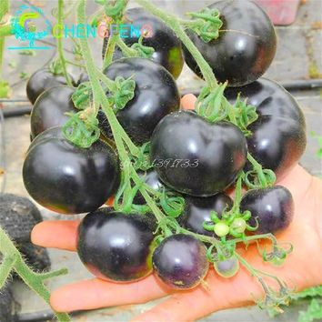 200pcs/Bag black tomato bonsai rare vegetable fruit bonsai high quality summer food 90%+ germination flower pot planters