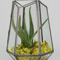 Magical Thinking Hexagonal Terrarium - Clear One