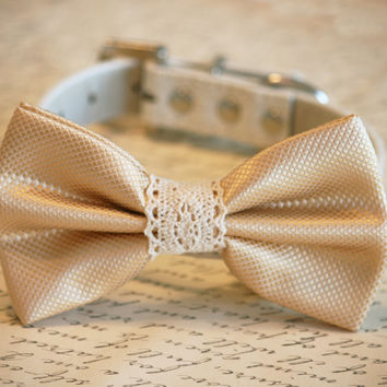Cream Wedding dog Collar, Cream wedding accessory, Collar of 2015, Dog Bow tie, Dog lovers, bow with Lace