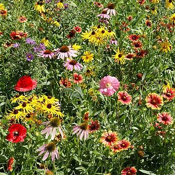 Wildflower Midwest Mix Seeds (7g+Seeds)