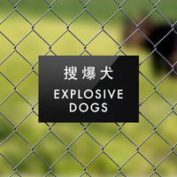 Dog Sign Fail. Funny Chinglish Fence Signage. Explosive Dogs