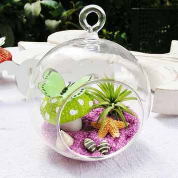 Green Polka Dot Sea Urchin with Butterfly Glass Globe Hanging Terrarium Kit w Tillandsia  Air Plant - Easter gift - Birthday - Home Decor