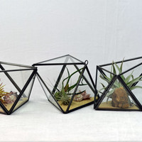 Set of 3 Modern Geometric Terrariums - Black - Air Plant Terrarium  -Green Gift - Home Decoration
