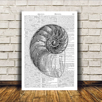 Nautical art Seashell poster Beach house decor Marine print RTA276