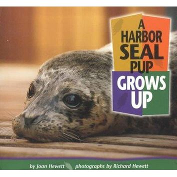 A Harbor Seal Pup Grows Up (Baby Animals)