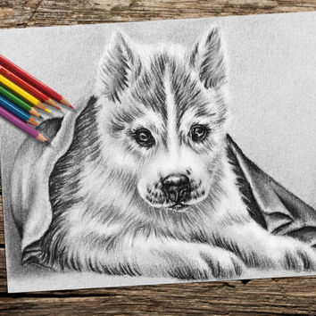 Husky Dog coloring book pages, adult coloring book, coloring pages, adult coloring pages, coloring book for adults, printable coloring page