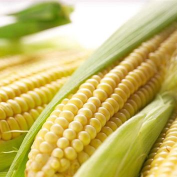 Super - Sweet Fruit Corn Seed Cultivation Sweet Waxy High - Yielding Species Can Be Eaten Raw Corn Seeds 10 Seeds