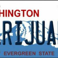 Washington Evergreen State Marijuana Car Truck Tag License Plate