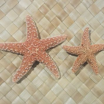 Starfish Hair Clips
