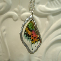 Stunning Real Madagascan Sunset Moth Real by workofwhimsy on Etsy