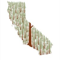 California Redwoods print by aruppel on Etsy