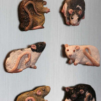 Custom Rat or Other Small Pet Magnets by jenbcartetc on Etsy