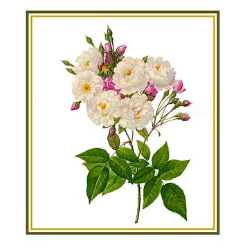 Noisette Rose Flowers Inspired by Pierre-Joseph Redoute Counted Cross Stitch Pattern