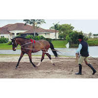 Pessoa Lunging System