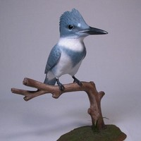 Lifesize Belted Male Kingfisher